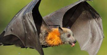 El murciélago de colores