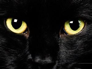 Moira, el gato negro