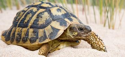 De por qué la Tortuga tiene el caparacho parchado
