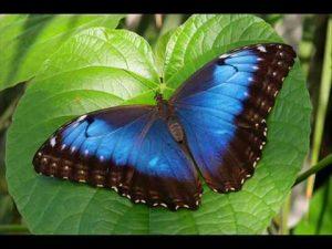 La Mariposa Mágica
