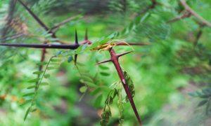 El Árbol de la Cruz