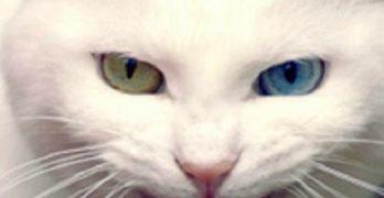 Soledad y la gata blanca