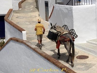 El viajero la mula y el Cristo